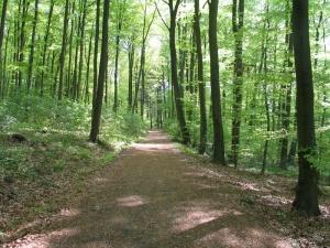 Seite an Seite - Auszeitgespräche in der Natur, Waldspaziergang